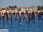 Agria Pilion - Griekenland - De Griekse Gids 005